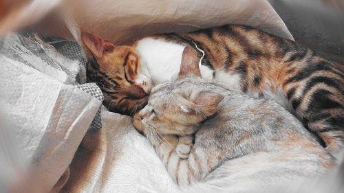 Por qué ronronean los gatos pequeños