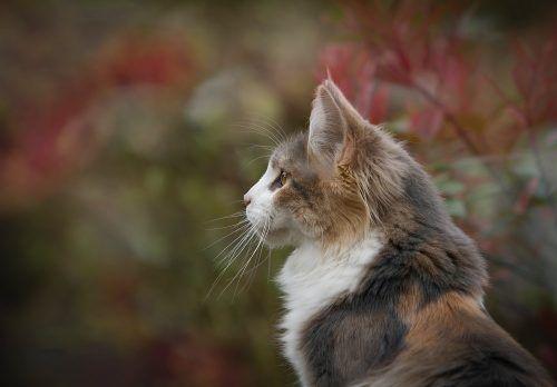 Se puede pasear a un gato
