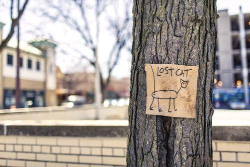 Buscar un gato perdido