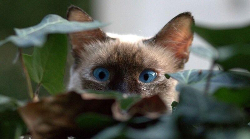 Cómo encontrar a un gato perdido