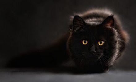 ¿Los gatos ven en la oscuridad?