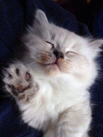Cómo elegir un veterinario para tu gato