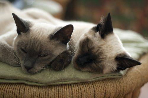 Dos gatos viviendo juntos