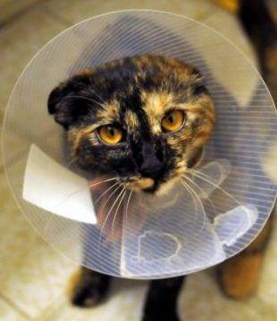 Escoger clínica veterinaria para gatos