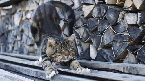 Falsas creencias sobre gatos
