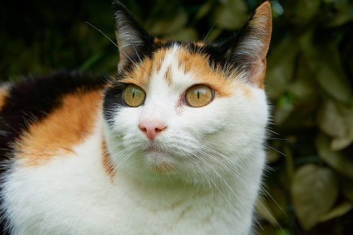 Falsos mitos en gatos