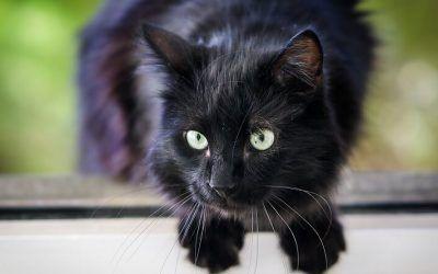 10 Mitos sobre gatos: ¡Descubre la verdad tras el mito!