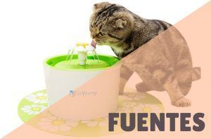 Fuentes de agua para gatos