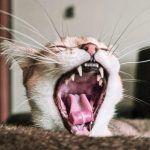 Por qué tu gato te muerde (y cómo evitarlo)