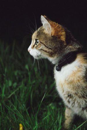Es bueno ponerle cascabel a los gatos
