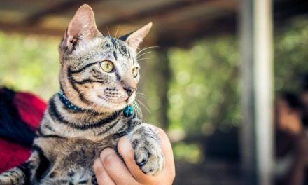 Ponerle cascabel al gato ¿es bueno o malo?
