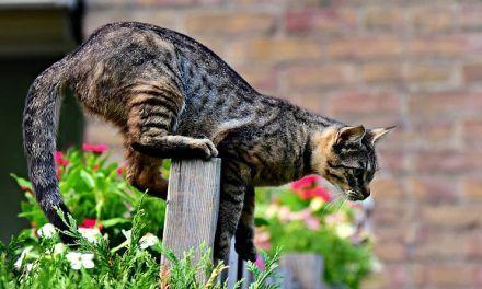 Cómo ahuyentar gatos sin hacerles daño