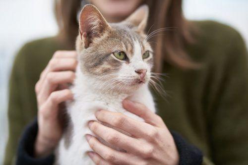 es malo convivir con un gato en el embarazo