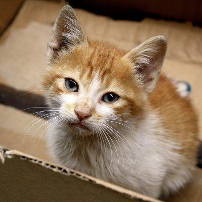porque a los gatos les encantan las cajas