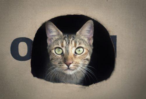 porque a los gatos les gustan las cajas
