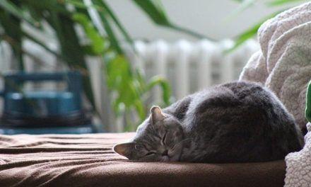 Descubre por qué los gatos son tan dormilones