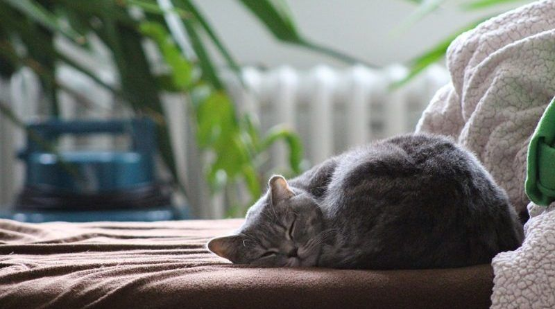 Por qué los gatos duermen tanto
