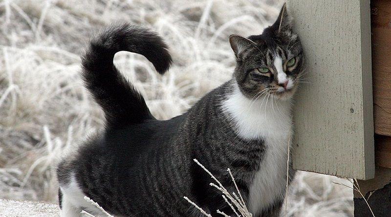 Por qué los gatos se frotan con las cosas