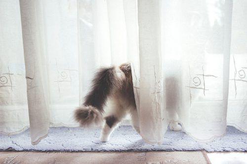 Por qué mi gato se restriega con las cosas