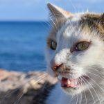 Descubre por qué tu gato abre la boca cuando huele algo