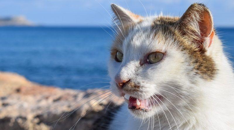 Por qué tu gato abre la boca cuando huele algo