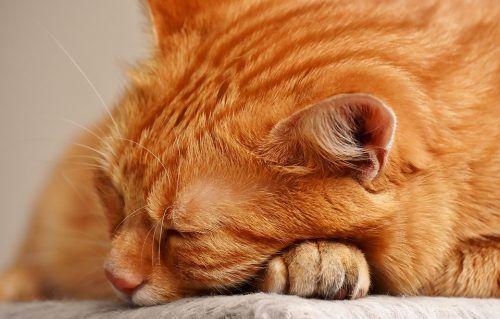 Por qué tu gato duerme tantas horas