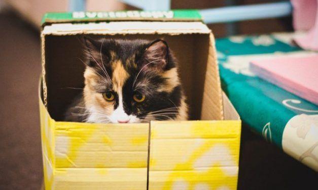 7 razones por las que los gatos aman las cajas