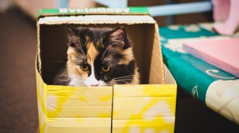 Razones por las que los gatos aman las cajas