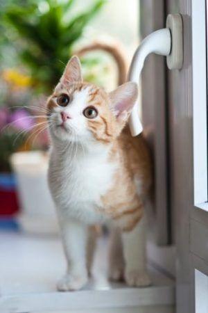 Los gatos almacenan recuerdos