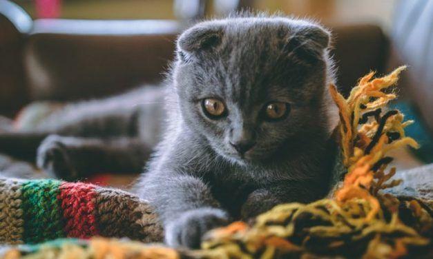 ¿Tu gato tiene recuerdos? Descubre cuánto dura su memoria