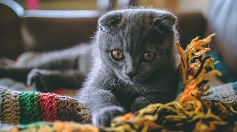 Los gatos tienen memoria