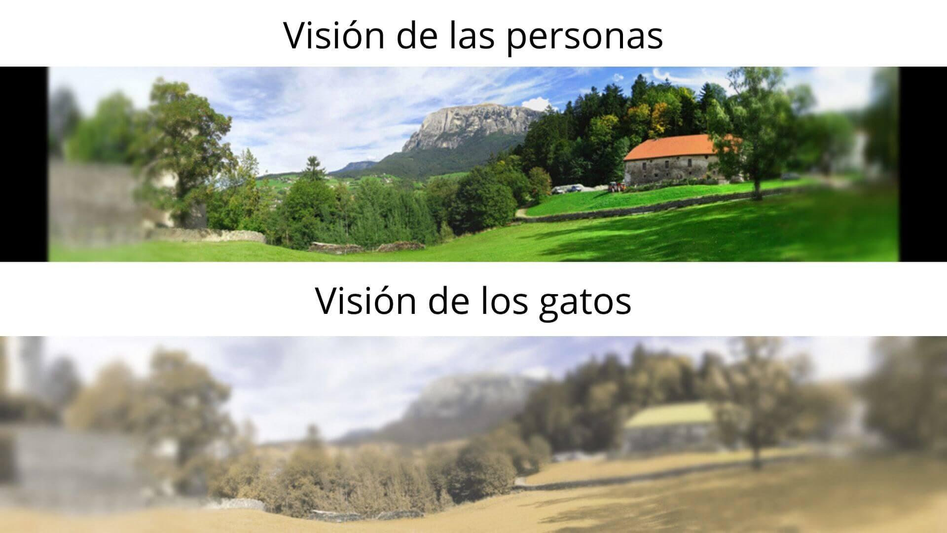 Ejemplo de la visión de los gatos