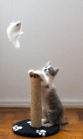 Jugar con tu gato en pisos pequeños