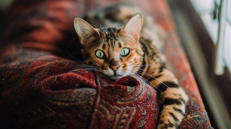 Se puede tener a un gato en un piso pequeño
