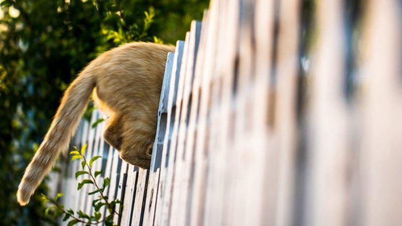 Cómo evitar que tu gato se escape del jardín