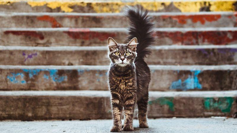 Cómo tranquilizar a un gato