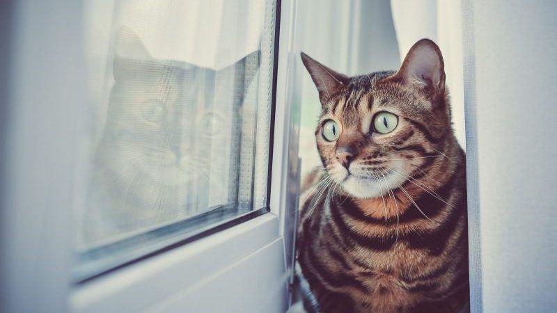 Dónde dejar a tu gato en vacaciones