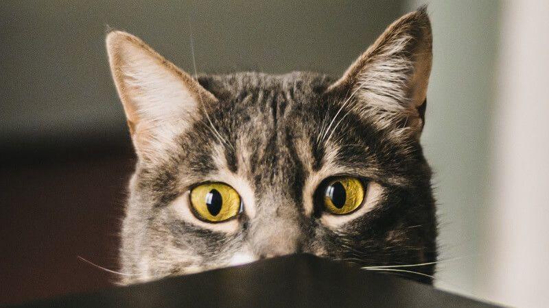 Cómo ganarse la confianza de un gato