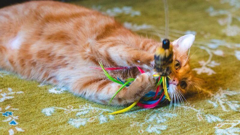 Cómo jugar con tu gato para que se canse
