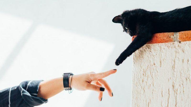 Por qué a los gatos les gusta subirse a sitios altos