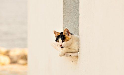 Gatos con acceso al exterior