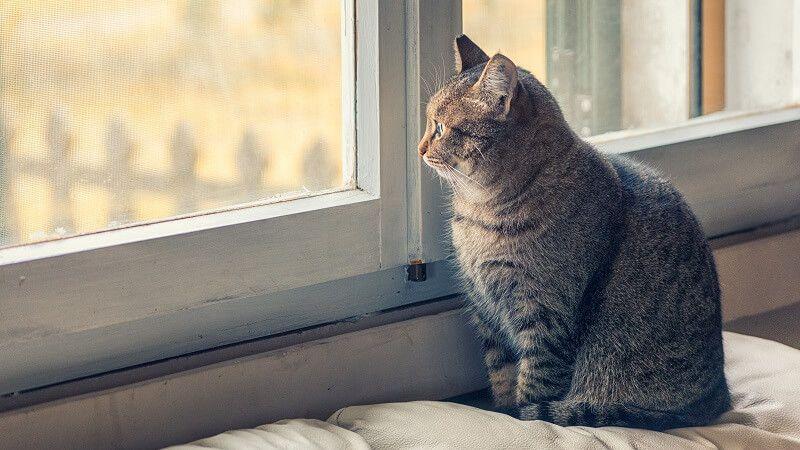 Gatos de interior vs gatos de exterior