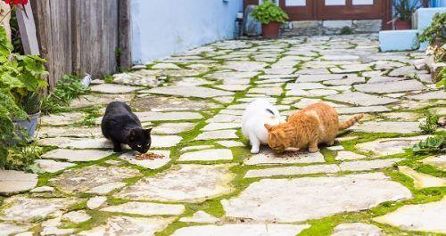 Ventajas y desventajas de los gatos de exterior