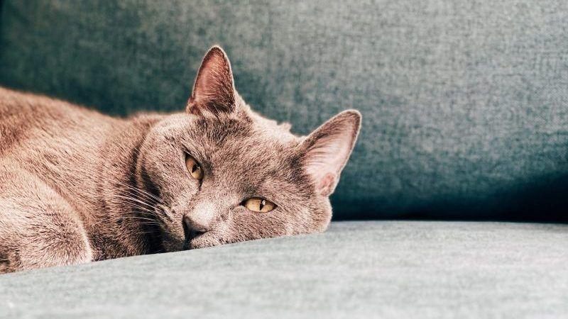 Cómo entretener a tu gato dentro de casa