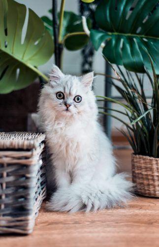 Entretener a tu gato