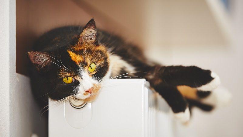 Síntomas de un gato aburrido