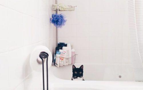 Gato dentro de la bañera