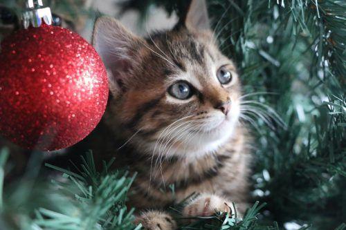 Gato dentro de un árbol de Navidad