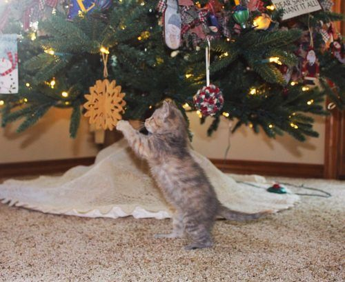 Gato jugando con un adorno de Navidad