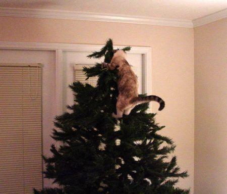 Gato subiéndose al árbol de Navidad